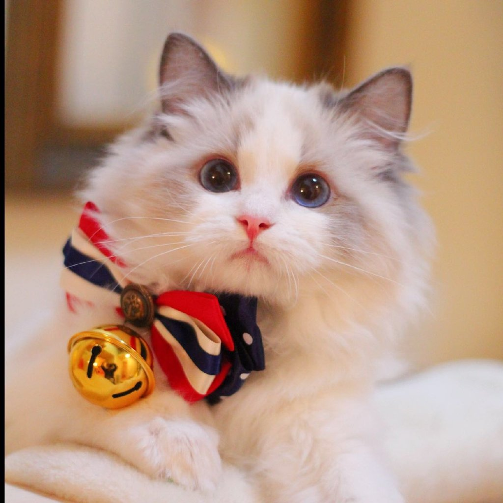 呆萌小可爱,#萌宠[超话]##猫咪表情包[超话]##云吸猫[超话]##宠物卖