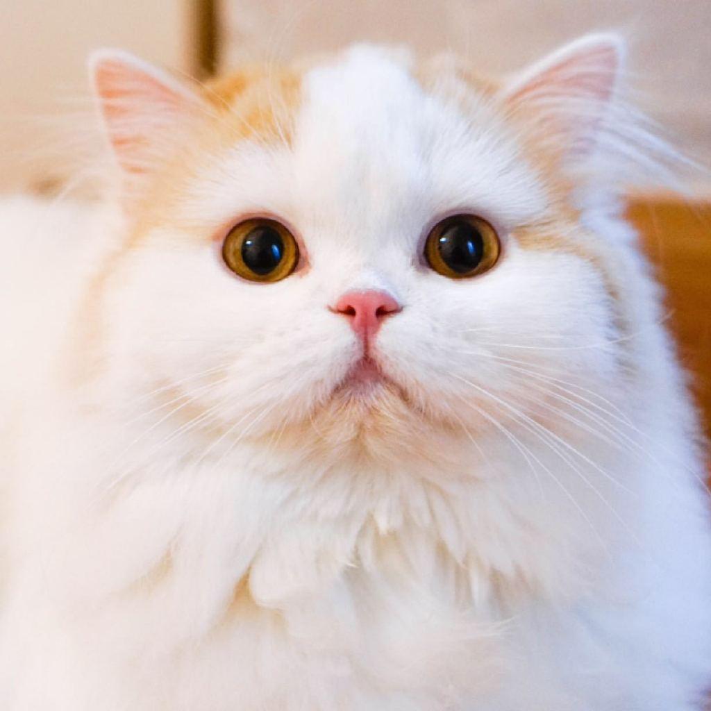 手绘叠叠猫