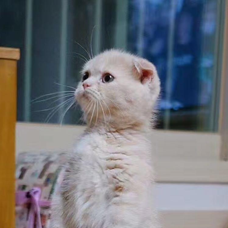 壁纸 动物 猫 猫咪 小猫 桌面 750_750