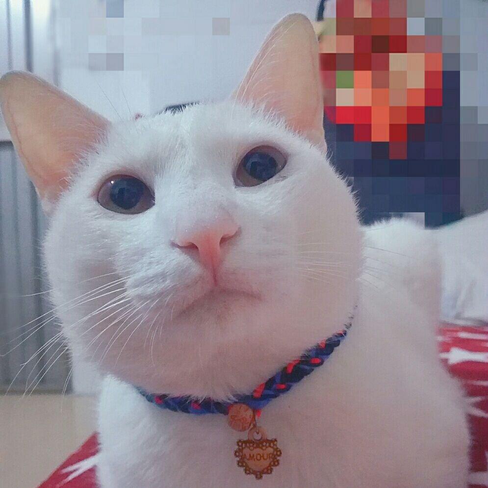 猫小喵311