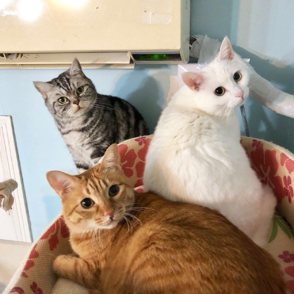 可怜猫猫图片大全可爱