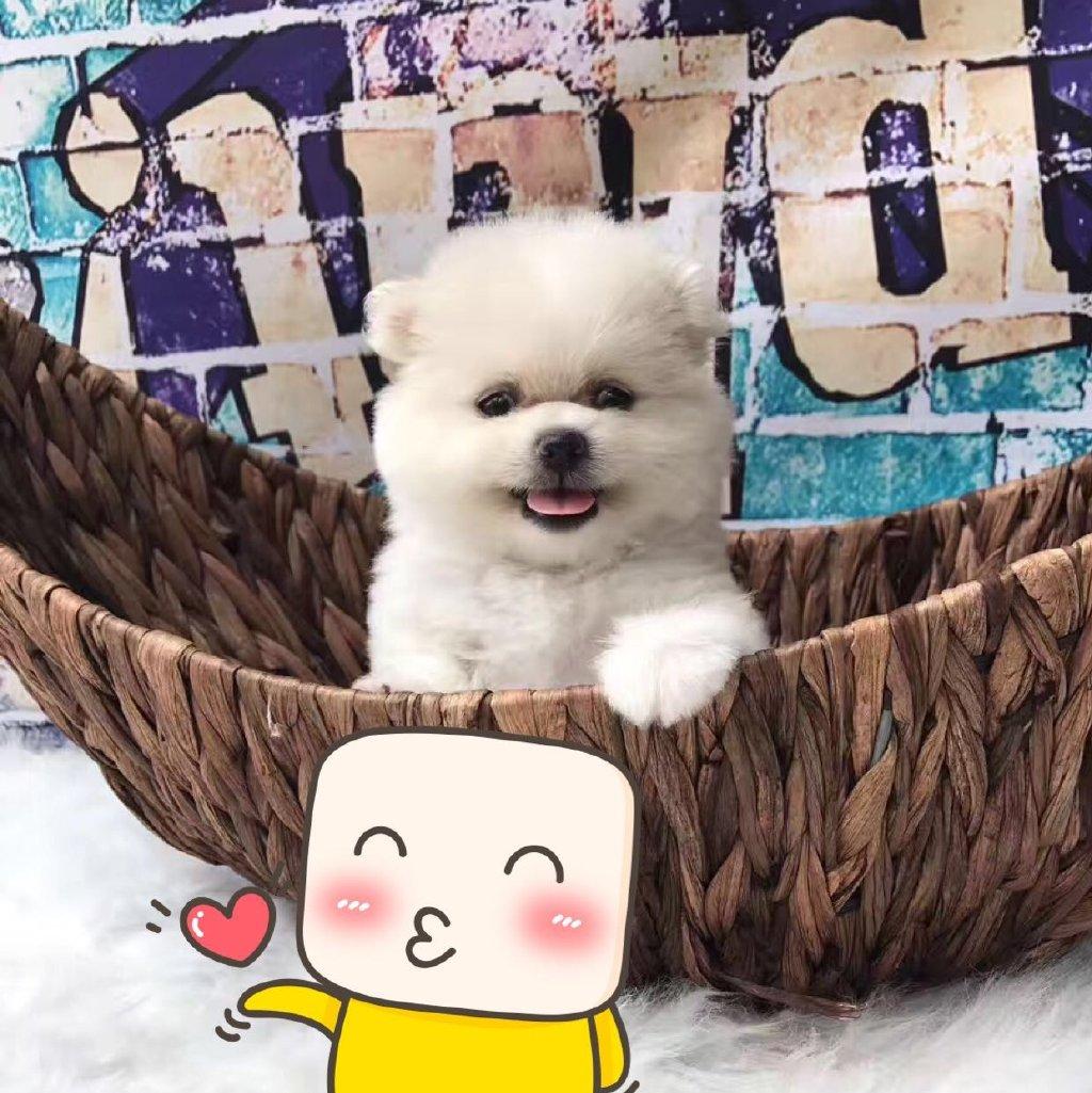 萌萌哒的小可爱 http://t.cn/.-来自无可取代我的爱