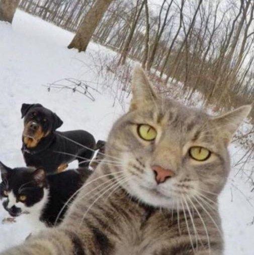 难过的猫猫图片可爱
