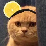 小橘猫百万微博照片