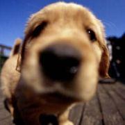 林564,发布寻狗启示热爱宠物狗狗,希望流浪狗回家的狗主人。