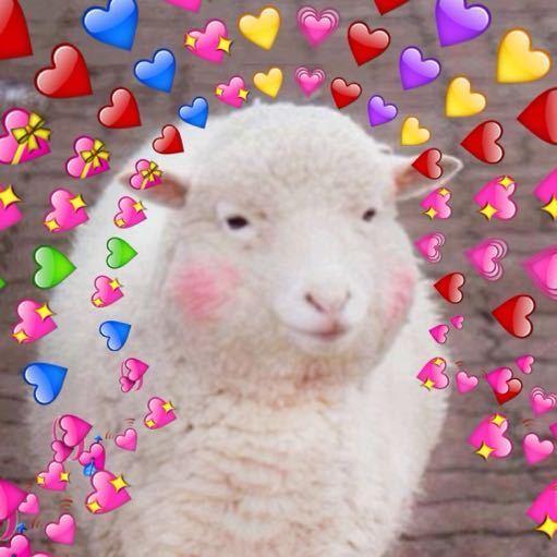 喜气洋羊子