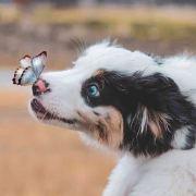 PuppiesEmergency微博照片