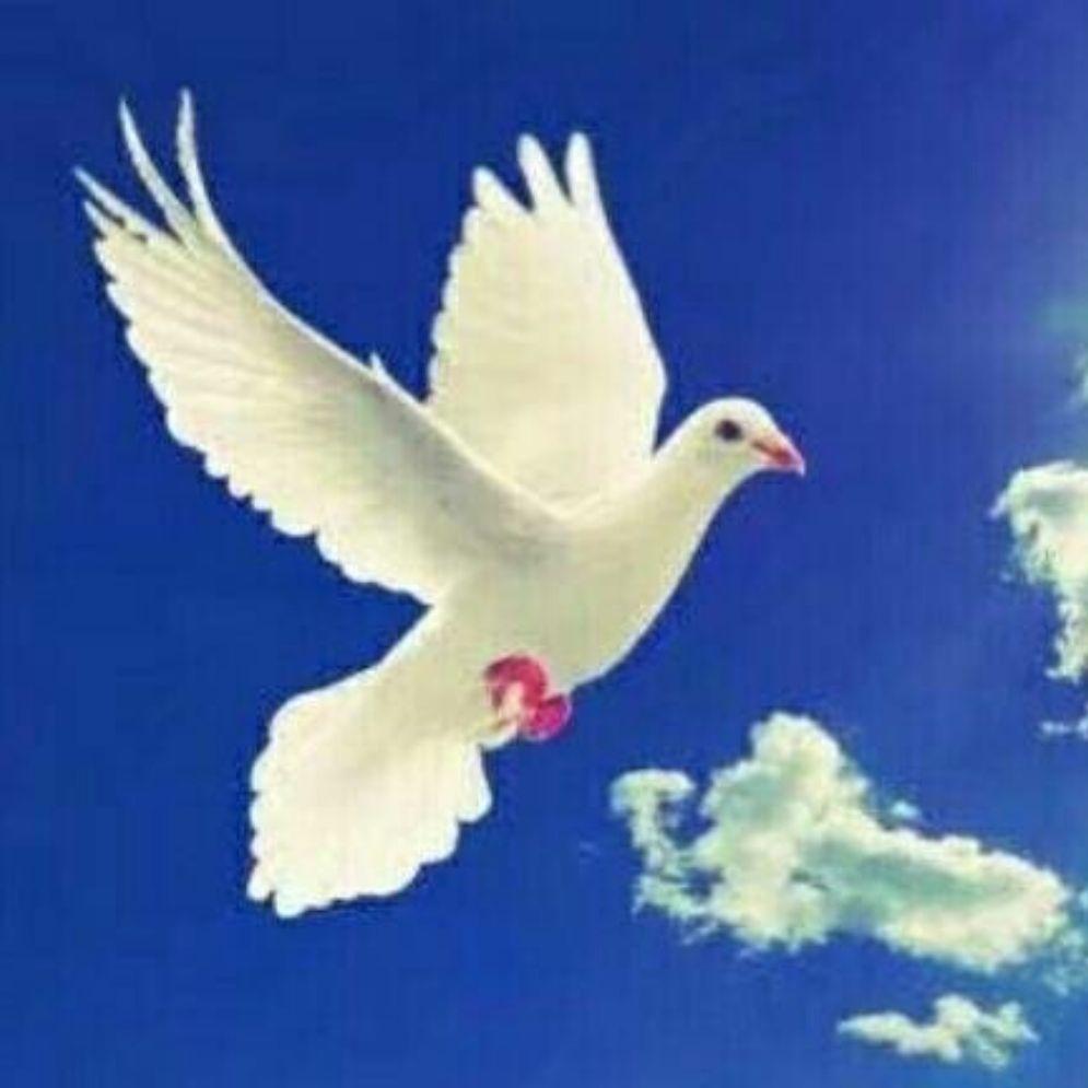 伟大的父神啊,愿你与我同在,愿你与我同行,愿你的圣灵时时事事指示我,我永远跟随你,仰望你,爱你!