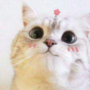 我是个胆小的善良小猫咪微博照片