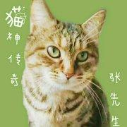 猫神传奇张先生