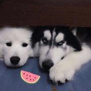 PDADZX,发布寻狗启示热爱宠物狗狗,希望流浪狗回家的狗主人。