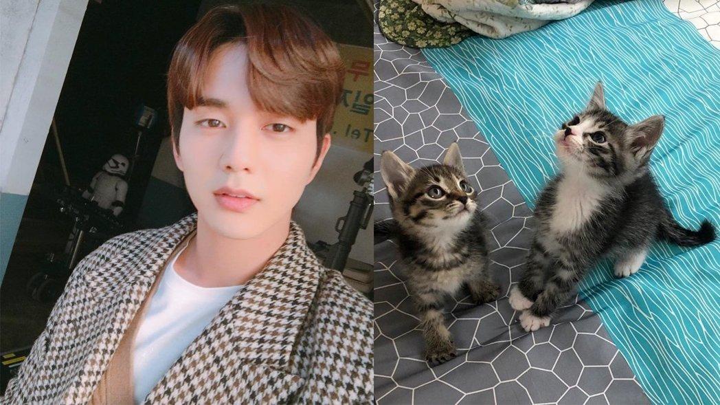 韩国网红寻找好心人领养两只幼猫,没想到认养人居然是韩国大明星!插图2