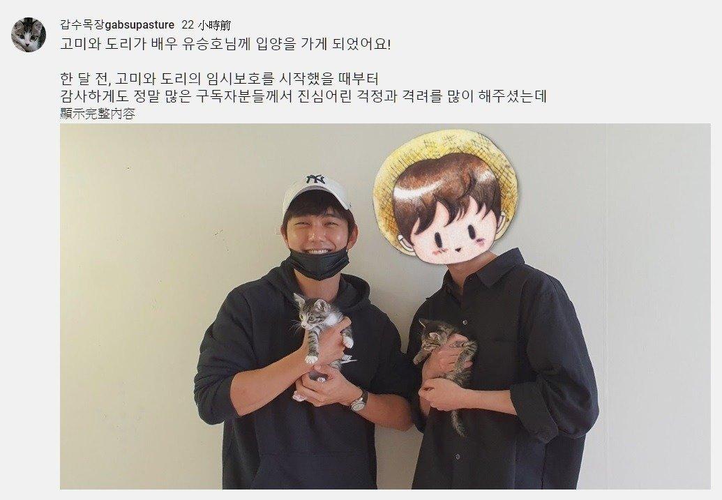 韩国网红寻找好心人领养两只幼猫,没想到认养人居然是韩国大明星!插图3
