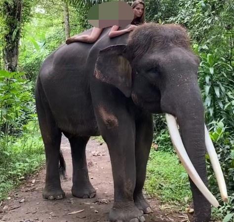 美女全裸骑大象惹议?名模《Alesya Kafelnikova》表示爱自然是天性. 养眼图片 第9张
