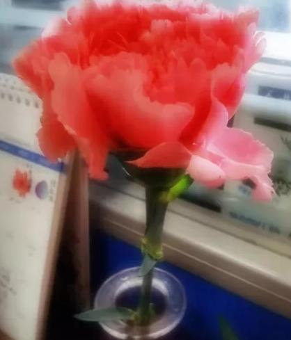 涨姿势送你一朵小红花的图片