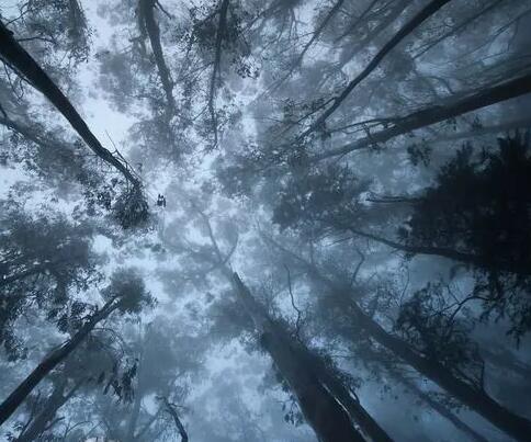 【蜗牛扑克】我已经爱上了这片森林