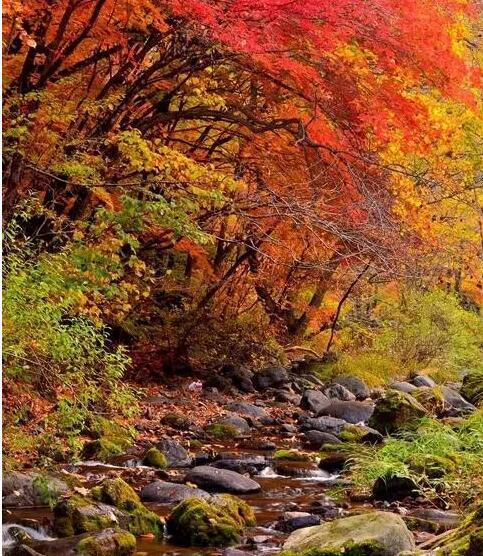 小编碎碎念《日本诗史》的图片