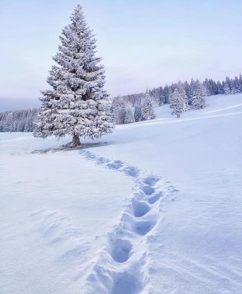 【蜗牛扑克】雪地上的脚印