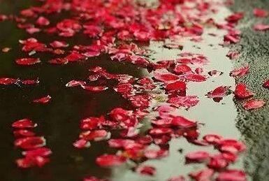 【PokerStars】晚风中一朵飘零的花