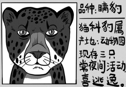 从出逃的豹子身上忽然领悟到了智商税的问题