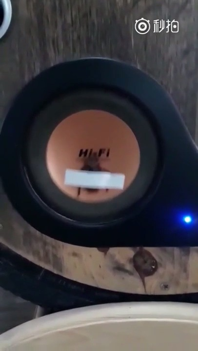 小强被电音轰炸