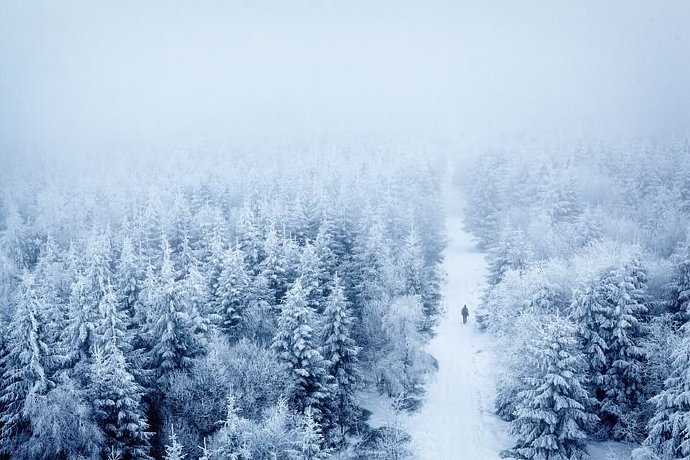 trees-5899195__480
